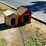 Some dog houses by the side of the road, possibly for area strays.