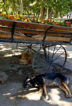 There are lots of stray dogs in the city and surrounding areas. People generally treat them with either indifference or kindness. People even put out water for them.